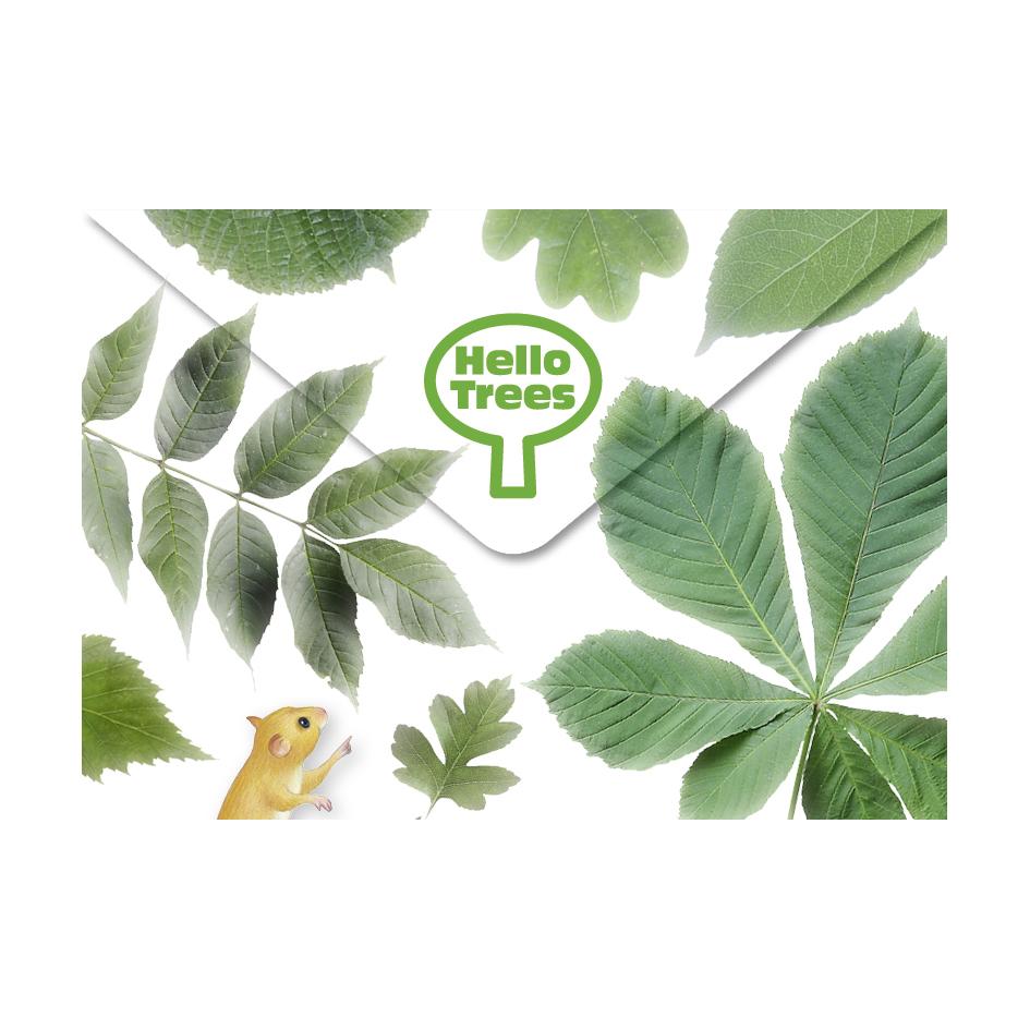 Hello-Trees-box